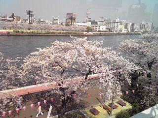 桜@隅田川